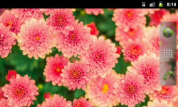 Pretty Spring Flowers Wallpaper screenshot 4/4