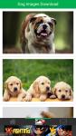 Dog Images Download screenshot 2/6