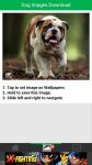 Dog Images Download screenshot 3/6