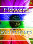 Beautiful Flower Wallpapers screenshot 1/3