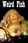 Weird Fish  screenshot 1/3