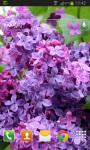Flower Lilac Live Wallpaper screenshot 2/2