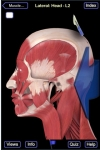 Muscle System (Head and Neck) screenshot 1/1