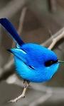 Blue Bird LWP2 screenshot 1/3