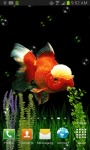 GOLDFISH UNDERWATER LWP screenshot 3/4