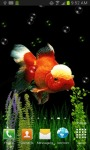 GOLDFISH UNDERWATER LWP screenshot 4/4