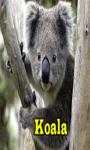 Koala screenshot 1/3