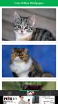 Free Kitten Wallpaper screenshot 2/6