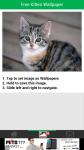 Free Kitten Wallpaper screenshot 3/6