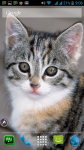 Free Kitten Wallpaper screenshot 6/6