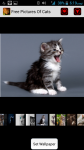 Free Pictures Of Cats screenshot 1/4