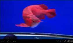 Red Arowana Live Wallpaper screenshot 2/5