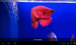 Red Arowana Live Wallpaper screenshot 4/5