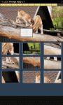Animal Picture Puzzle screenshot 3/6