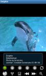Dolphins : Ocean Wild Animals screenshot 1/6
