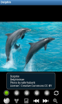 Dolphins : Ocean Wild Animals screenshot 2/6