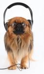 Animal Soundboard - Bring fun zoo to your hand screenshot 2/6