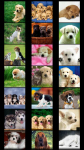 Dogs Wallpapers free screenshot 1/5