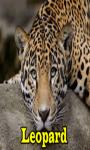 Leopard Lite  screenshot 1/3