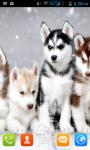 Siberian Husky Live Wallpaper Best screenshot 3/4