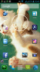 Free Cats Wallpapers screenshot 6/6