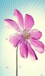 Flower Star Live Wallpaper screenshot 1/3