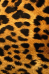 Cheetah Stripe Live Wallpaper screenshot 4/5