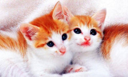 Best Cute Cats HD Wallpaper screenshot 3/6