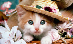 Best Cute Cats HD Wallpaper screenshot 4/6
