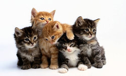 Best Cute Cats HD Wallpaper screenshot 5/6