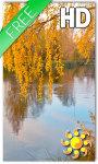 Autumn birch grove screenshot 1/2