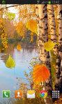 Autumn birch grove screenshot 2/2