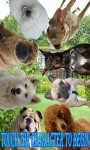 Dog Dentist Doctor - Fix Puppy Breeds Decay Teeth screenshot 3/3