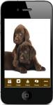 Ringworm In Dogs screenshot 1/4