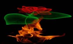 Fire Rose Magic Live Wallpaper screenshot 2/3