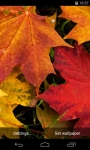 Autumn Leaves Live Wallpaper FREE screenshot 1/5