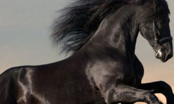 Best Horse Wallpaper screenshot 1/4