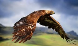 EAGLE ATRACTION IN THE AIR HD WALLPAPER screenshot 4/6