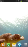 SeaTurtle video wallpaper Free screenshot 1/6