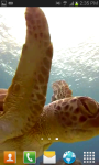 SeaTurtle video wallpaper Free screenshot 4/6