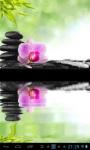 Zen orchid  lwp screenshot 1/2
