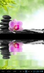Zen orchid  lwp screenshot 2/2
