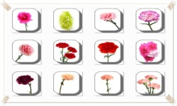 Carnation Flowers Onet Classic Game screenshot 2/3