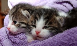 Cats and Kittens Wallpapers screenshot 2/4