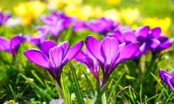 Jigsaw Puzzles Flower World screenshot 4/5