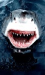White Shark Live Wallpape screenshot 1/3