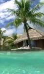 Smartphone in the tropical sea live wallpaper screenshot 2/4