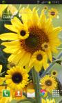 Sunflower Live Wallpaper HD screenshot 2/2