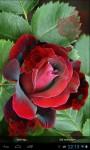 Red Roses screenshot 2/4
