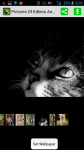 Pictures Of Kittens And Cats screenshot 1/4